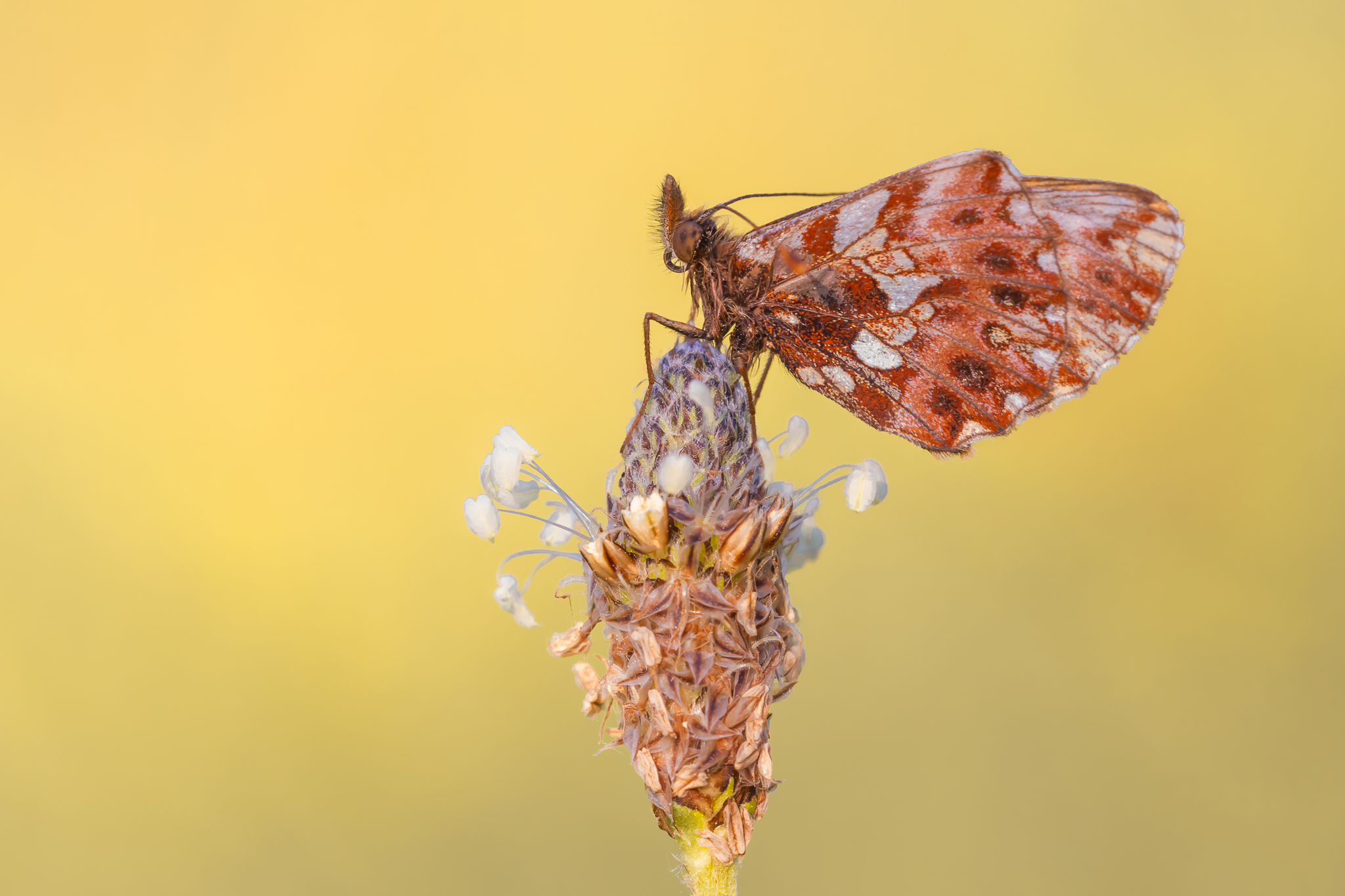 Leo Deknatel, Vlinders fotograferen, Vlinderfotografie