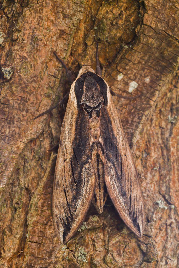 Vlinders, Vlinder, Vlinderfotografie, Vlinders fotograferen.