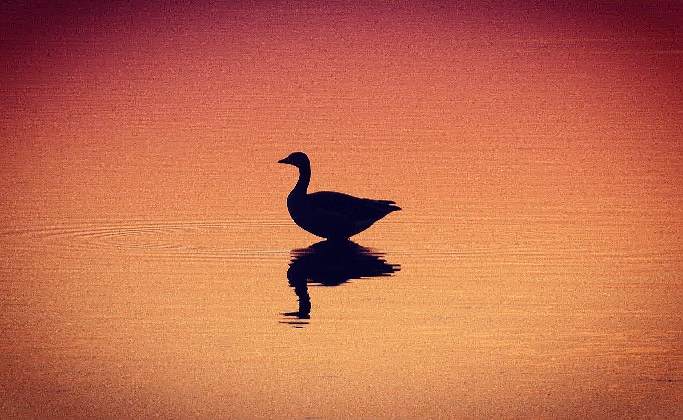 Annette Krist, Reflectie, Hobbyfotografie, Hobby Fotografie Inspiratie Groep, Natuur, Natuurfotografie